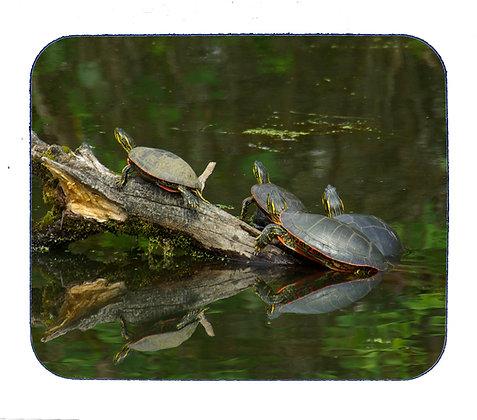 Turtles Mousepad