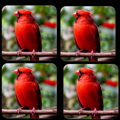 Cardinal Coaster Set of 4