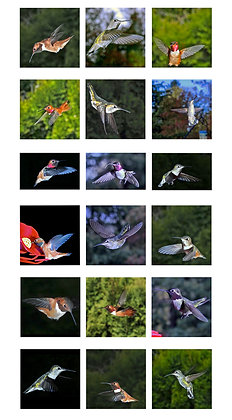 Beautiful Hummingbirds Photo Panel