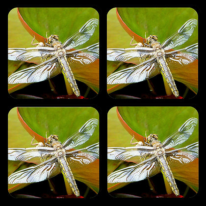 Dragonfly Coasters Set of 4