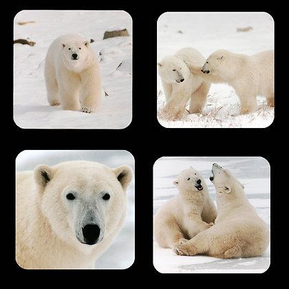 Polar Bears Coaster Set of 4