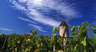 moulin_a_vent_beaujolais_vineyardcdaniel
