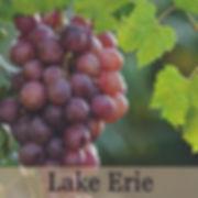 Lake Erie Wine Region