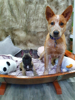 Rustic Pet Sun Bed Cattle dog and French