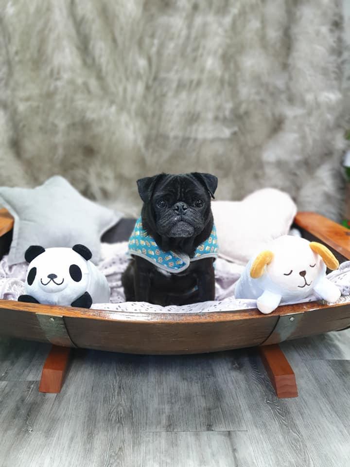 Rustic Pet Sun Bed Puggo