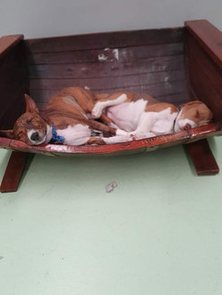 Full Length Barrel Bed Puppies