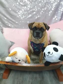 Rustic Pet Sun Bed Pug Mix