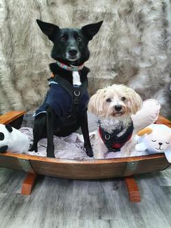 Rustic Pet Sun Bed 2 dogs