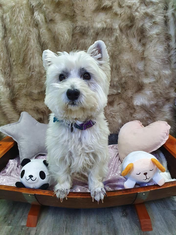 Rustic Pet Sun Bed Westie