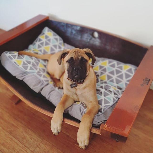 XL Barrel Bed Mastiff