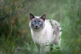 grey cat jo felbontas.jpg