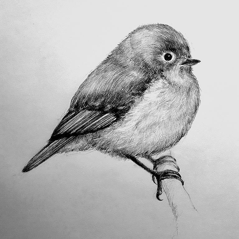 bird illustration Nada Orlic