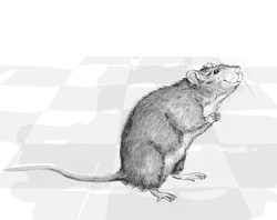 Illustration rat