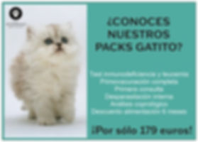 pack gatito copy.jpg