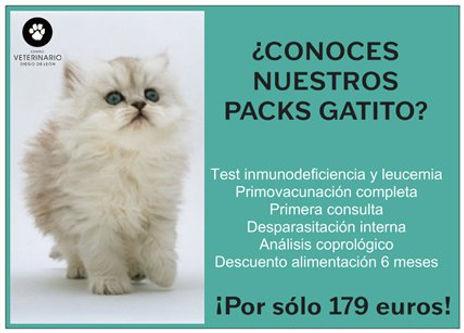 pack gatito copy.jpg
