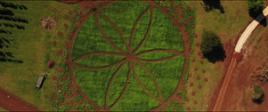 Aerial view of industrial hemp Farm
