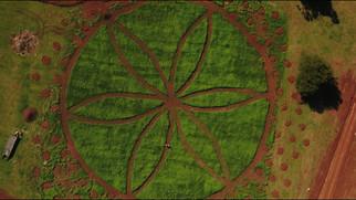 aerial view of Hemp Farm.jpg