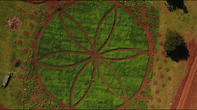 aerial view of Hemp Farm.jpg