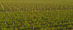 Penfolds winery, Barossa Valley, SA.jpg