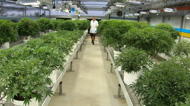 Medifarm Grow Room.jpg