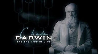 Tree-of-life-title-card.jpg