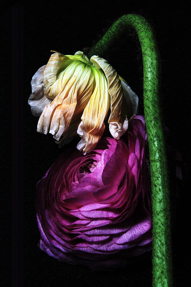Beauty In Decay: Poppy & Rose