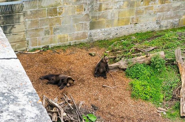 스위스 베른 곰공원