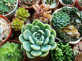 Various colour succulent plants garden.j