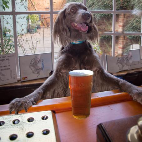 Hadleigh Dog Calandar Shoot