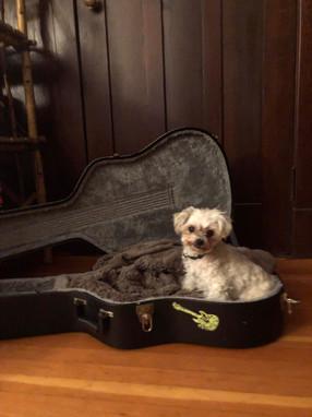 Gigi, band wanna be mascot.