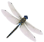 png+only++dragonfly_edited.png