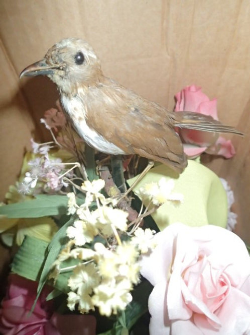 Bird Automaton in Jardiniere