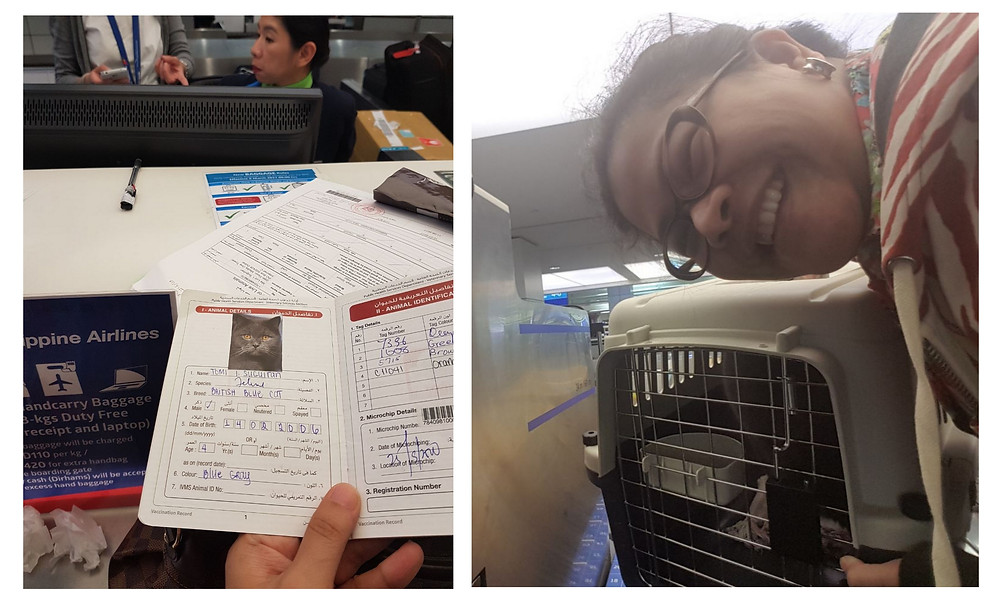 The proof that Luchie went back to the Philippines for good? Our 12-year old cat Tomi Tom-Tom Suguitan also is nag-for good! Passport, plane ticket and all. This British-Blue cat will now become a Pinoy cat.