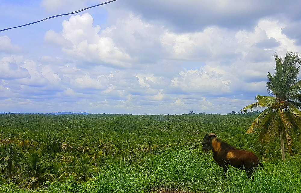 View from the top. Excuse me, Mr. Goat, we're just inspecting a barangay where we will hold a future Bayanihan.