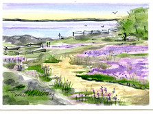 Camas Blooming, Cattle Point 20/008a