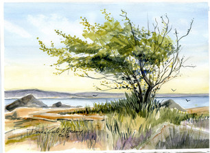 Wind Esquimalt Lagoon 16/029