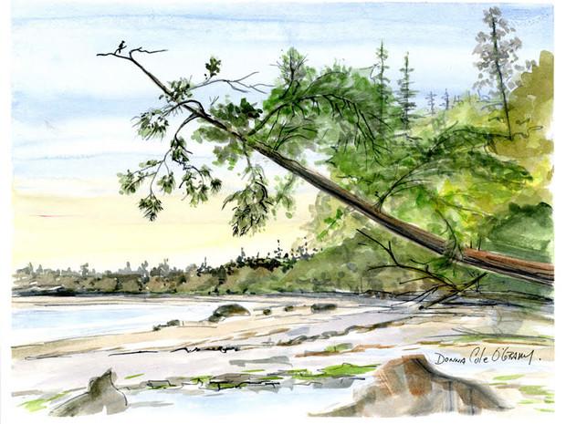 Low Tide, Mt. Douglas Park 10/022