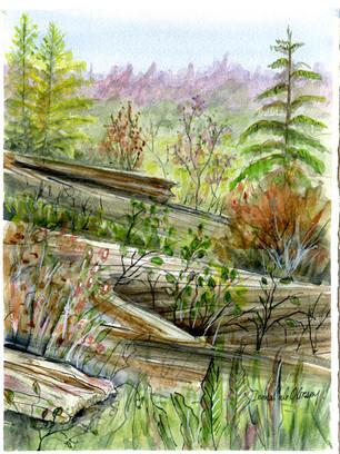 Logs, Soule Creek 19/013