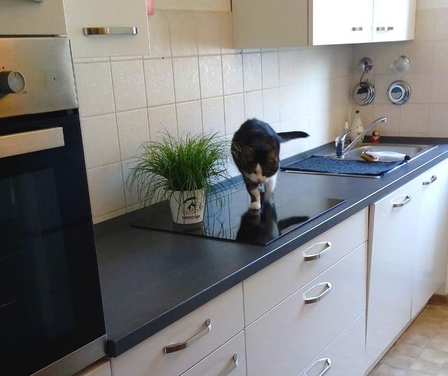 Tricks für eine saubere Küche | Clean Kitchen Hacks