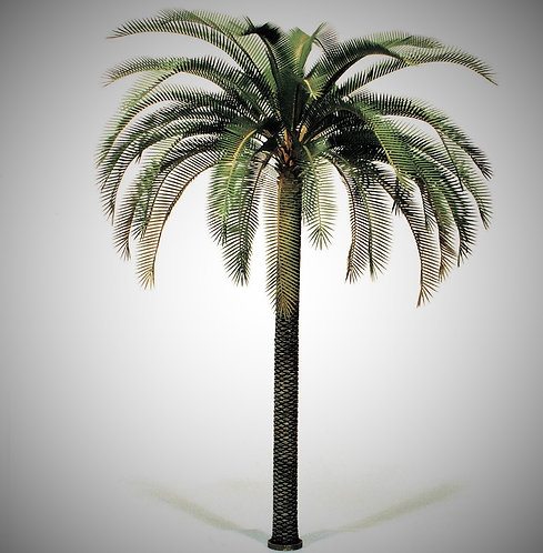 Cod. 4066 PALM TREE (phoenix dactilifera)