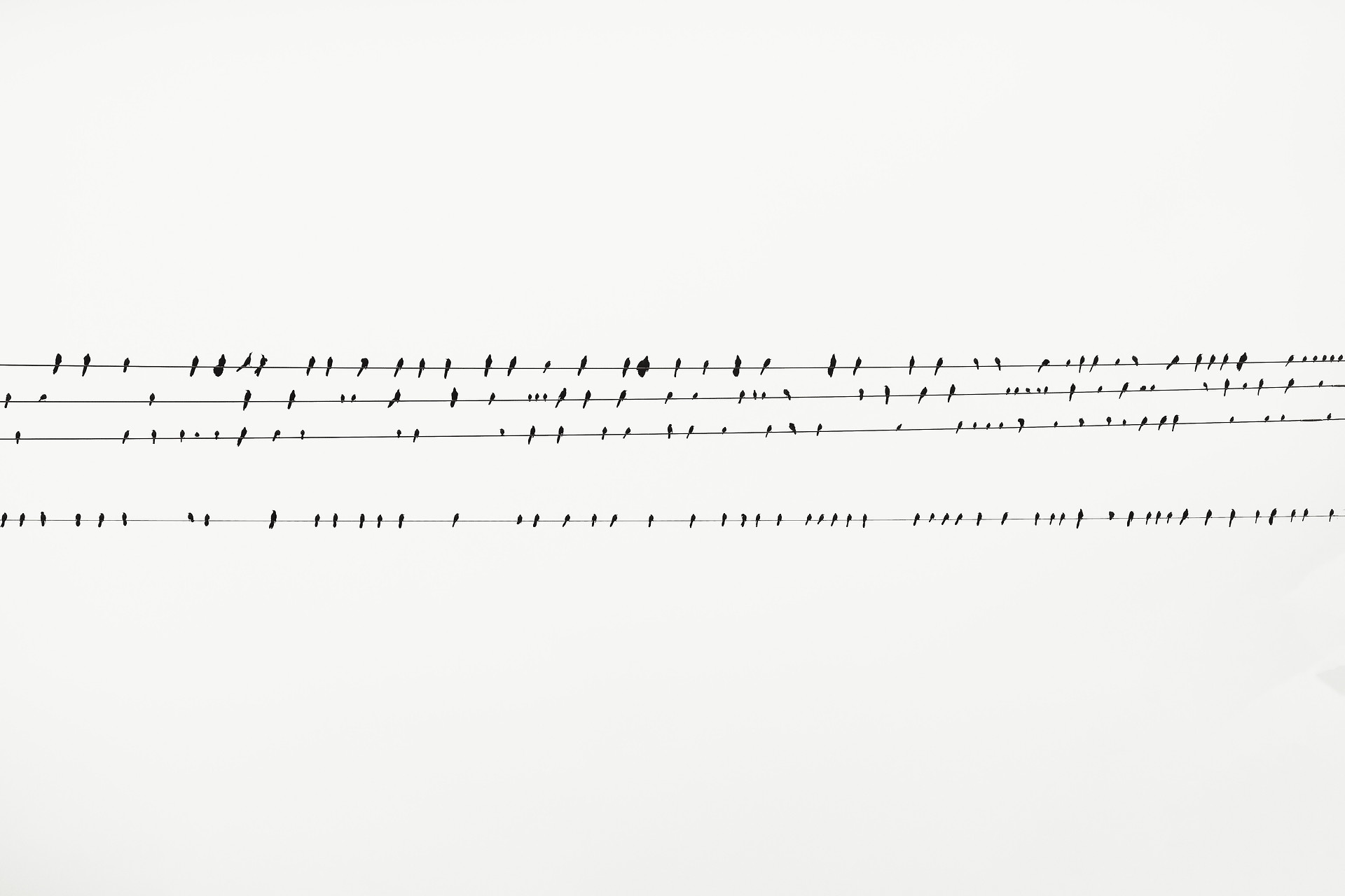 birds-cable-lines-perched-2434420.jpg