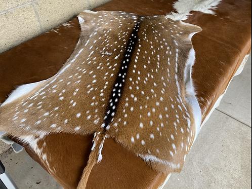 Chital Deer Skin 02