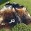 Thumbnail: Cowhide 43