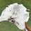 Thumbnail: Cowhide 81
