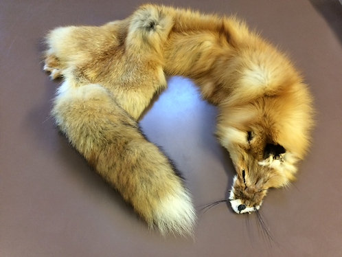 American Red Fox Skin