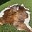 Thumbnail: Cowhide 30