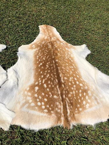 Fallow Deer Skins