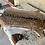 Thumbnail: Chital Deer Skin 01 2nd grade