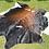 Thumbnail: Cowhide 68