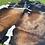 Thumbnail: Cowhide 49